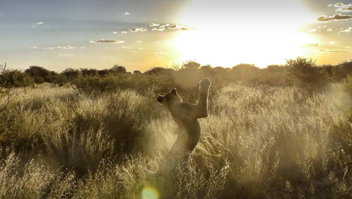 Auslandsaufenthalt in Botswana